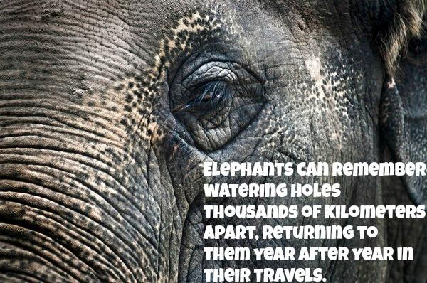 5 Reasons Why Holding an Elephant in Captivity Goes Against Everything Natural http://t.co/RB6C67XAx7 http://t.co/bkBI2DRovb