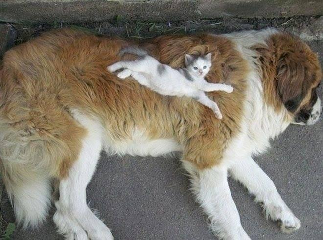 He loves his new furry, over-sized pillow http://t.co/HDGcPYoMML