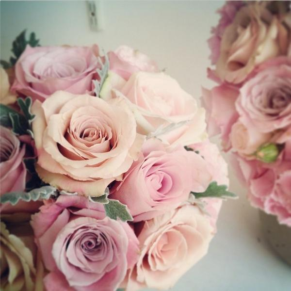 "Love Garden Roses: All For Love On Twitter: ""My #FridayFav Quicksand Roses"