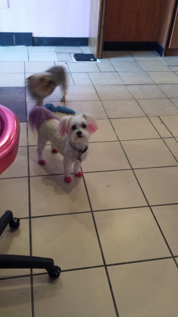 Doggy Stylz Doggystylzls Twitter