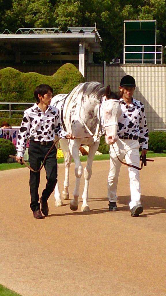 RT @yamapi_pi  ブチコ! BUCHIKO (King Kamehameha Shirayukihime) about to debut at Kyoto http://t.co/YTnlFYK8ZH