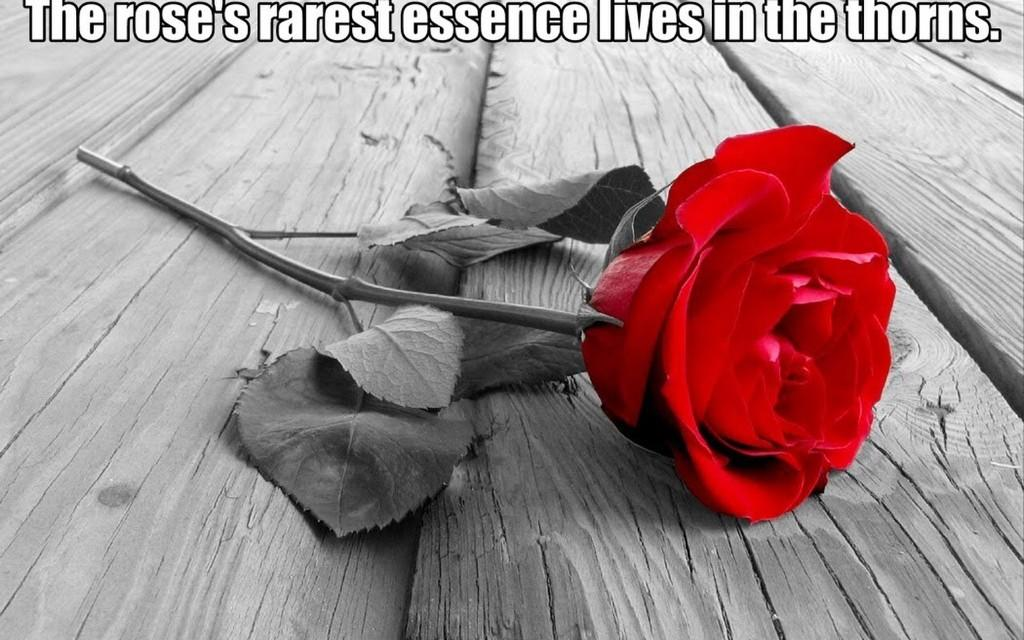 Iran Style On Twitter The Roses Rarest Essence Lives In The