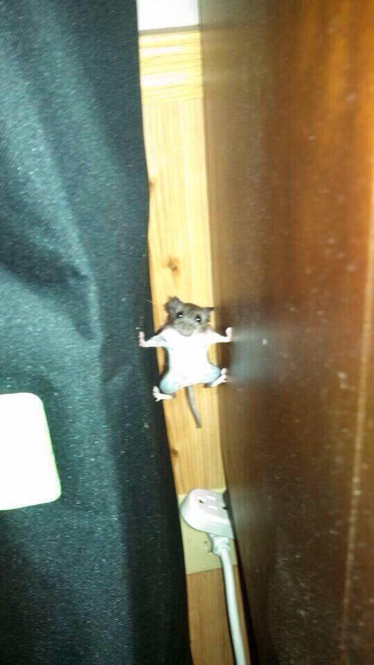 RT @ThatsEarth: If I see a mouse put forth this kind of effort, he deserves to live in my house http://t.co/hFHXqsQFix