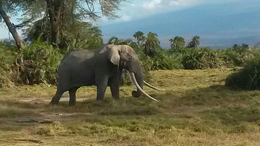 Ajuma Nasenyana  - Elephants ta twitter @ajumanasenyana keeptimalive