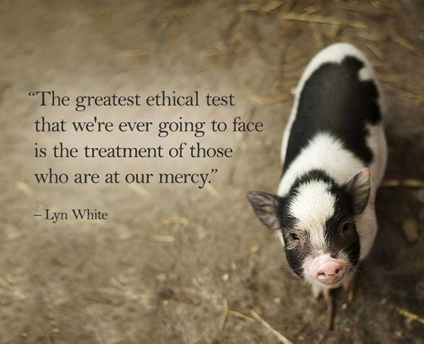 Choose #compassion. #vegan http://t.co/Rh0RTSTijF