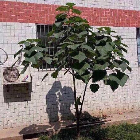 影が恋人同士に見える 木がリア充してるんだけどww