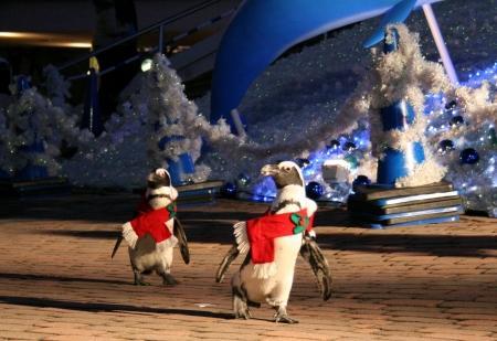 """おほ!ケープペンギンが、フィンランドの妖精・トントゥに""""変身""""して登場だって。「八景島シーパラダイス:今年のクリスマスもイワシイリュージョン」 kirei.mainichi.jp/kireinews/news… pic.twitter.com/oiZ1KBwbvm"""