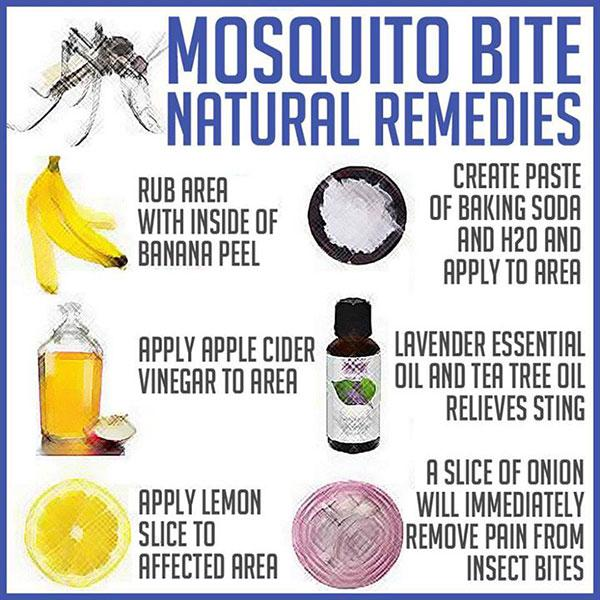 Natural Remedies To Prevent Mosquito Bites