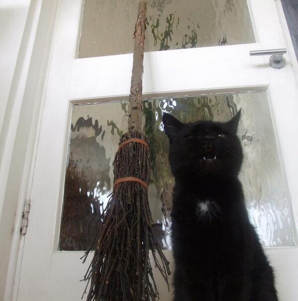 RT @MYSADCAT: My cat is sad because every October he thinks about the persecution of witches and cries out in genuine pain. http://t.co/Aga?