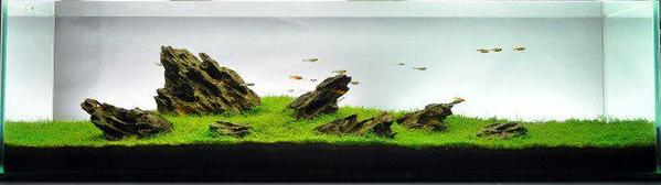 Aquascape Indonesia Aquanesia Twitter