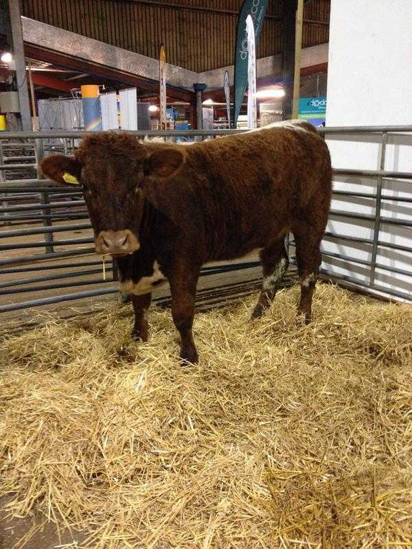 Longhorn Cattle Soc on Twitter: