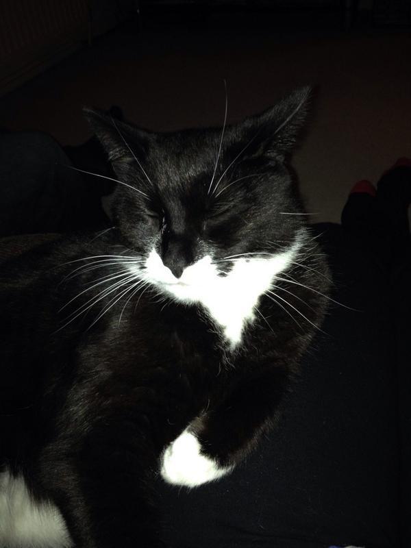 Love my cat #CPBlackCats http://t.co/FbbNmImNLk