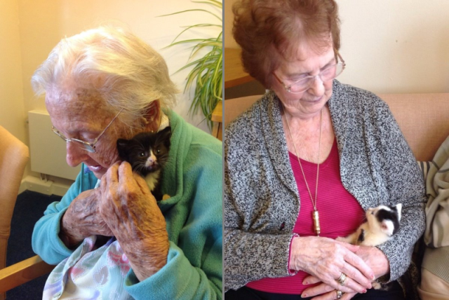 RT @CeliaHammond: @ThisisDavina Two of our rescued kittens visited Bethune Court care home this week! http://t.co/T8Zb6ZFaPL http://t.co/Iy…
