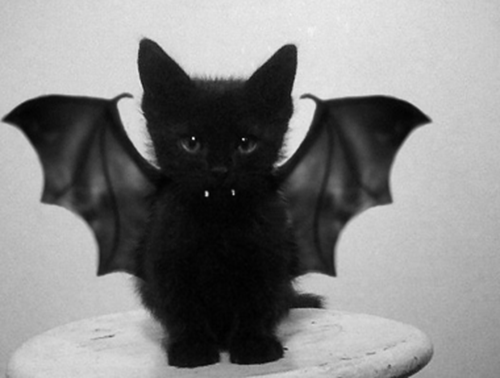 RT @Cats: Count Catula #HappyHalloween http://t.co/Mt8vgM31h2