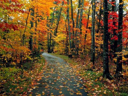 Mirad qué paisajes más chulos del otoño japonés. Ah, no, que son de Extremadura #paraisoscercanos http://t.co/J7324yfh4o