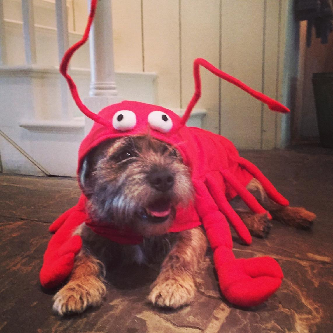 Happy Halloween from Bert. (He is dressed as a lobster by the way). http://t.co/89GQ6dj9gT