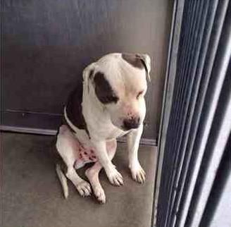 This weekend visit your local rescue centre & invite a new best friend into your home :) #adopt #pets http://t.co/0myJFFHGop
