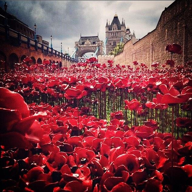 I would like people to wear their #poppy with pride because they feel it's right - not because society say you must. http://t.co/7MmKRZXM7W
