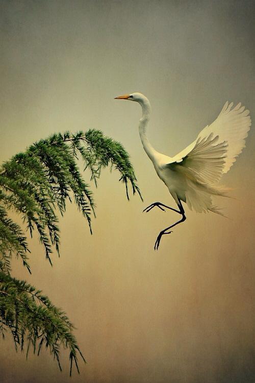 Nice  RT @lavoix48: Egret #art #photography Irena Szklarzewska http://t.co/zmnaSxLtOo