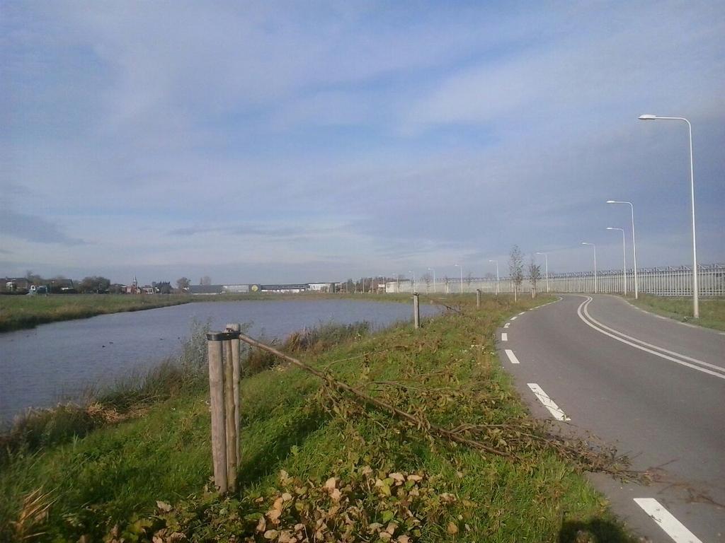 Rondvragen D66 over bomenslopers aan de van Luyklaan