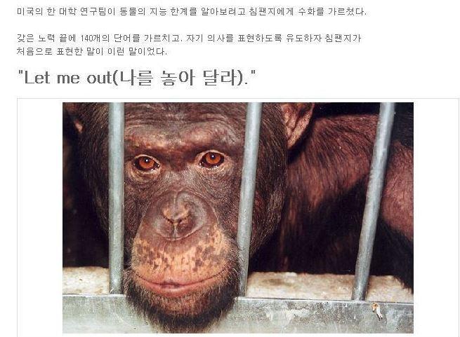 """미국의 한 연구팀이 침팬지에게 수화를 가르쳤다고 한다. 침팬지가 수화로 연구팀에 건낸 최초의 말은...""""나를 놓아 달라""""였답니다. ㅠㅠ http://t.co/0pcdqsO5vy"""