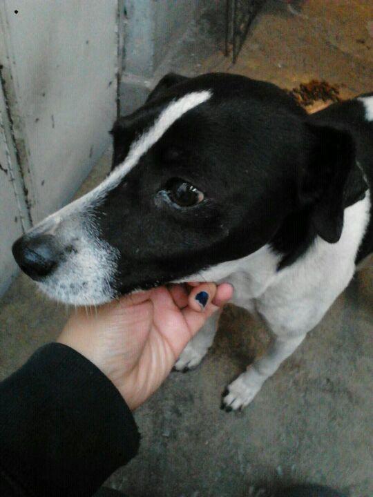 "@MundoPatitas  ""@MissHattori: RT: @d3andego se encontró a este perrito en Neza, ¿alguien que quiera adoptar? http://t.co/wHPyYP9NQ4"""