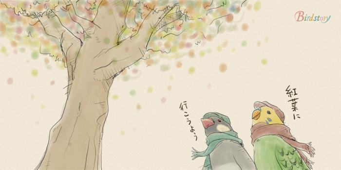 近くの公園を散策しまして、ちょっと色づき始めた紅葉を楽しみました。東京はこれからといったところでしょうか。小さな悩みもブッ飛びつつ、秋の紅葉は癒されますね~。 #文鳥 #セキセイインコ #紅葉