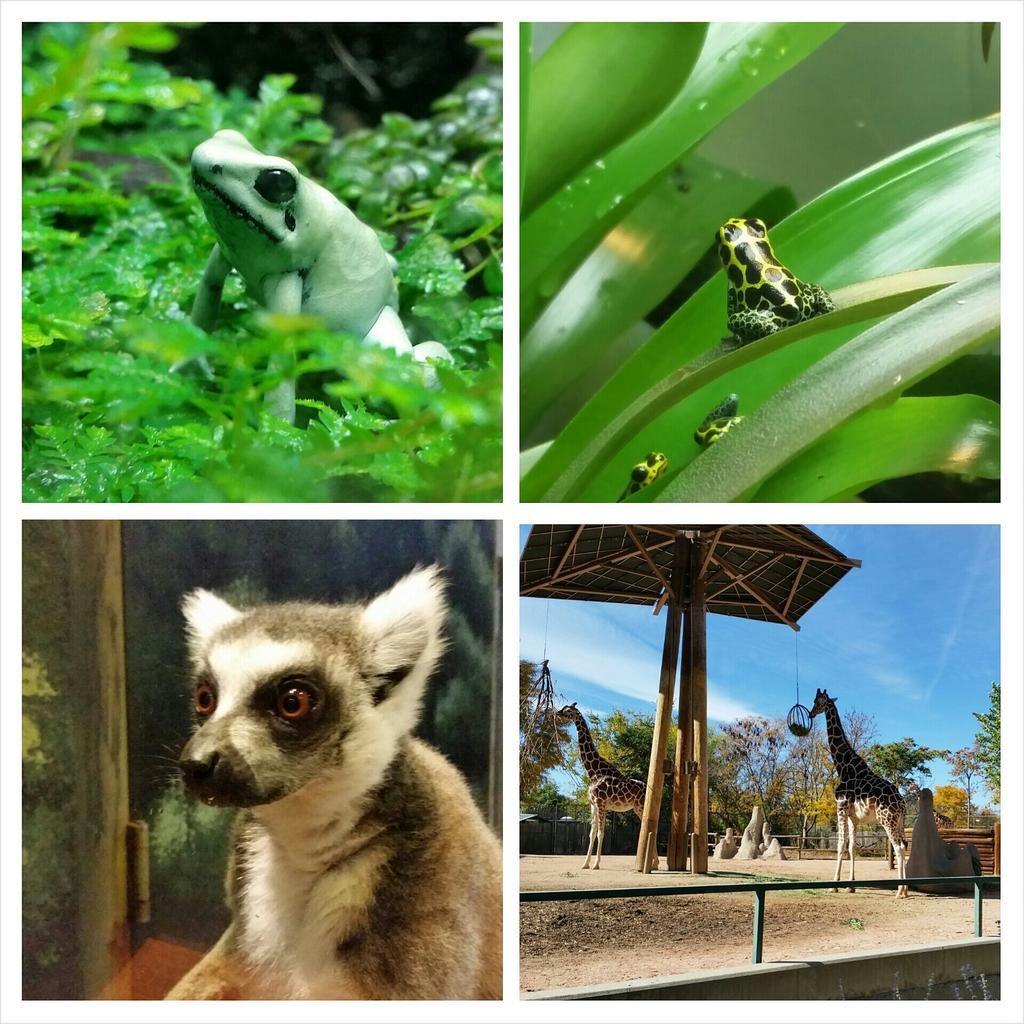 Denver Zoo Free Days: Denver Zoo (@DenverZoo)
