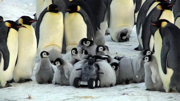 カラパイア : モフモフを装着し赤ちゃんペンギンに偽装したロボットがペンギンの子どもたちに取り囲まれる様子 karapaia.livedoor.biz/archives/52177… pic.twitter.com/s6Uc9kqpVB