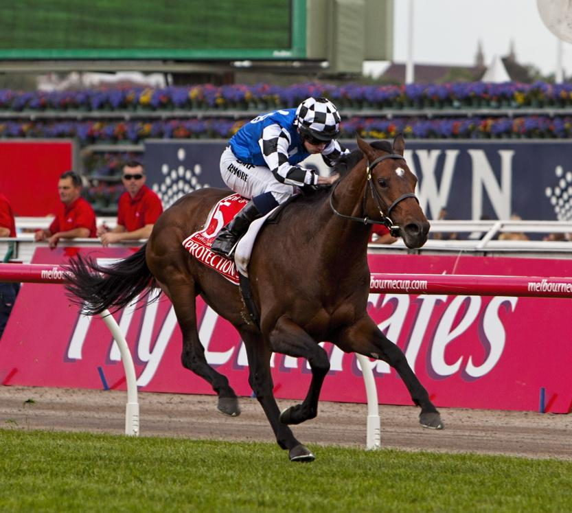 Protectionist #MelbourneCup @Austbloodstock #racing http://t.co/mflxgZaMan