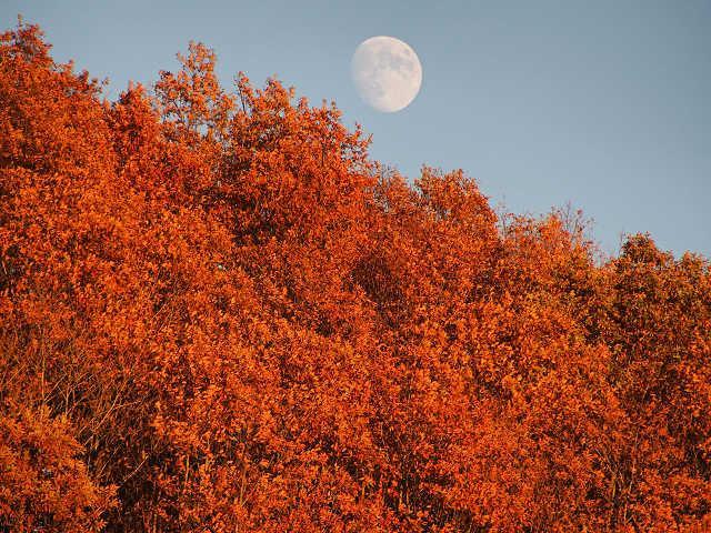 鹿角平の月。明日(11/5)はミラクルムーン?