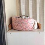 もはや何かのキャラクターw人間大嫌いな猫の隠れている姿が、全然猫に見えない!