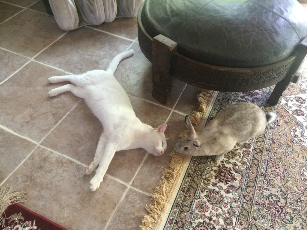 寝ているあびさんの唇を奪おうと、じわりと近づくペティさん、 pic.twitter.com/QTryaQAPXf