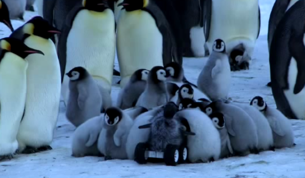 Hookcomp TechCrunch Researchers Send Robotic Penguin Babies In To Monitor Real Penguins Tcrnch 1y3oCHb Pictwitter 5gDikDG3jf