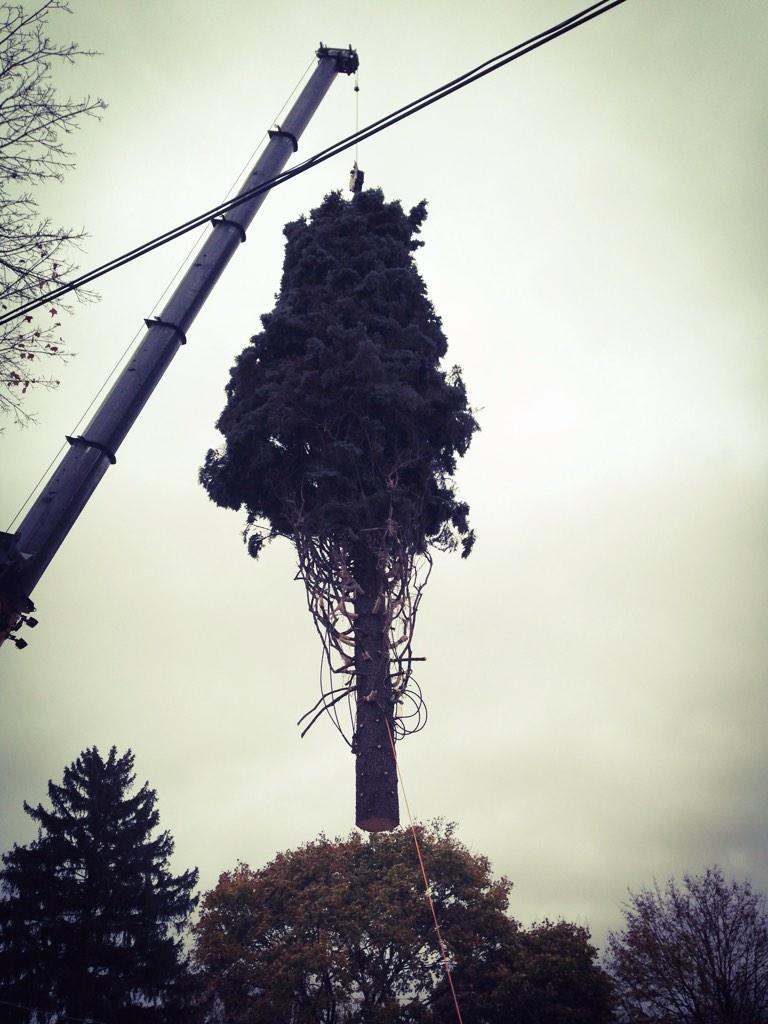 It's a bird! it's a plane! No, it's a blue spruce on its way to #Chicago as this year's official #Christmas tree!! http://t.co/a0wgoZhsmq