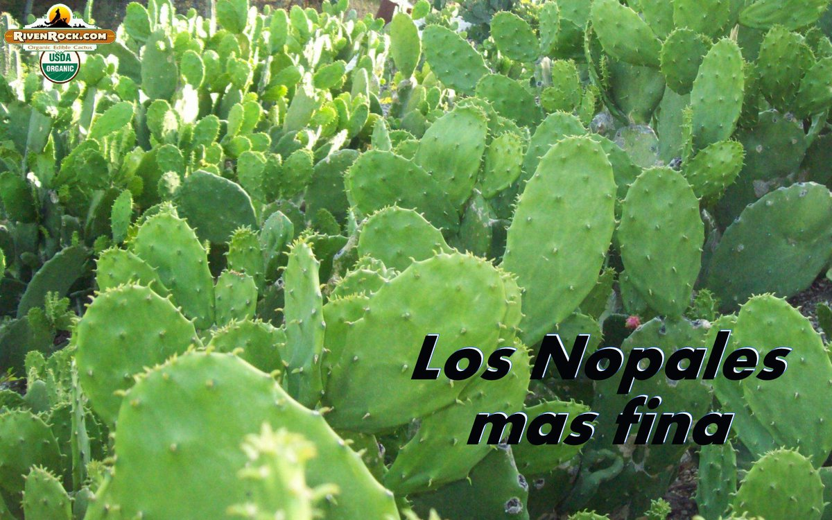 Los Nopales mas fina! The finest edible cactus! http://t.co/kifne7cQSY