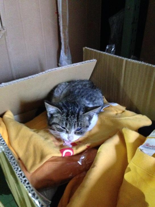 あの…倉庫のユニホームの箱に子猫発見したんですが、締め切ってあったのにどこから… ていうか、どうしたらいい? どなたか引き取り手はいないかな #akiba http://t.co/BVxmMUt9fJ