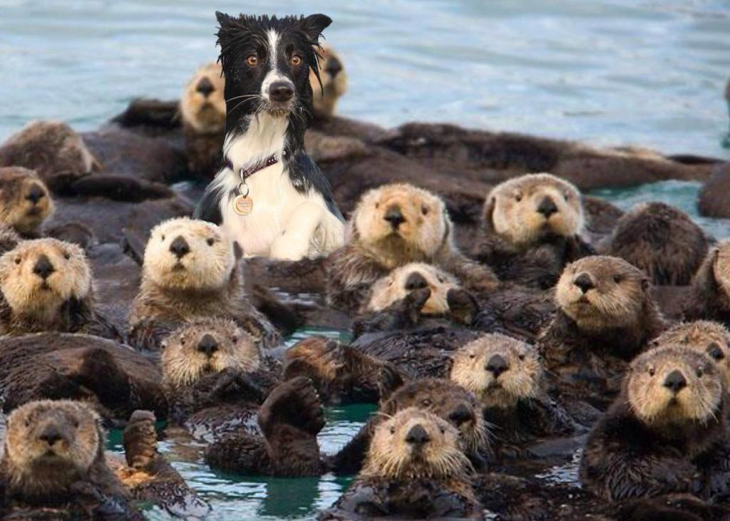 Want to see a bewildered dog surrounded by otters? Of course you do. http://t.co/eowhTw45pB