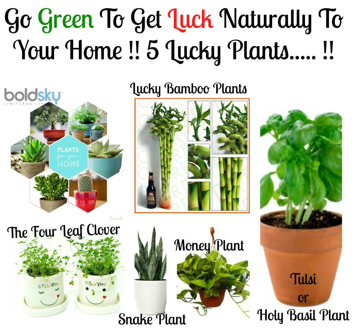 boldsky on twitter to know which good luck plants to keep in your