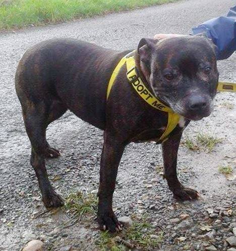 Angel 9 years is looking for a home #Worcester kennels http://t.co/oMlIw8fHR7 http://t.co/mkPk8vtPfc