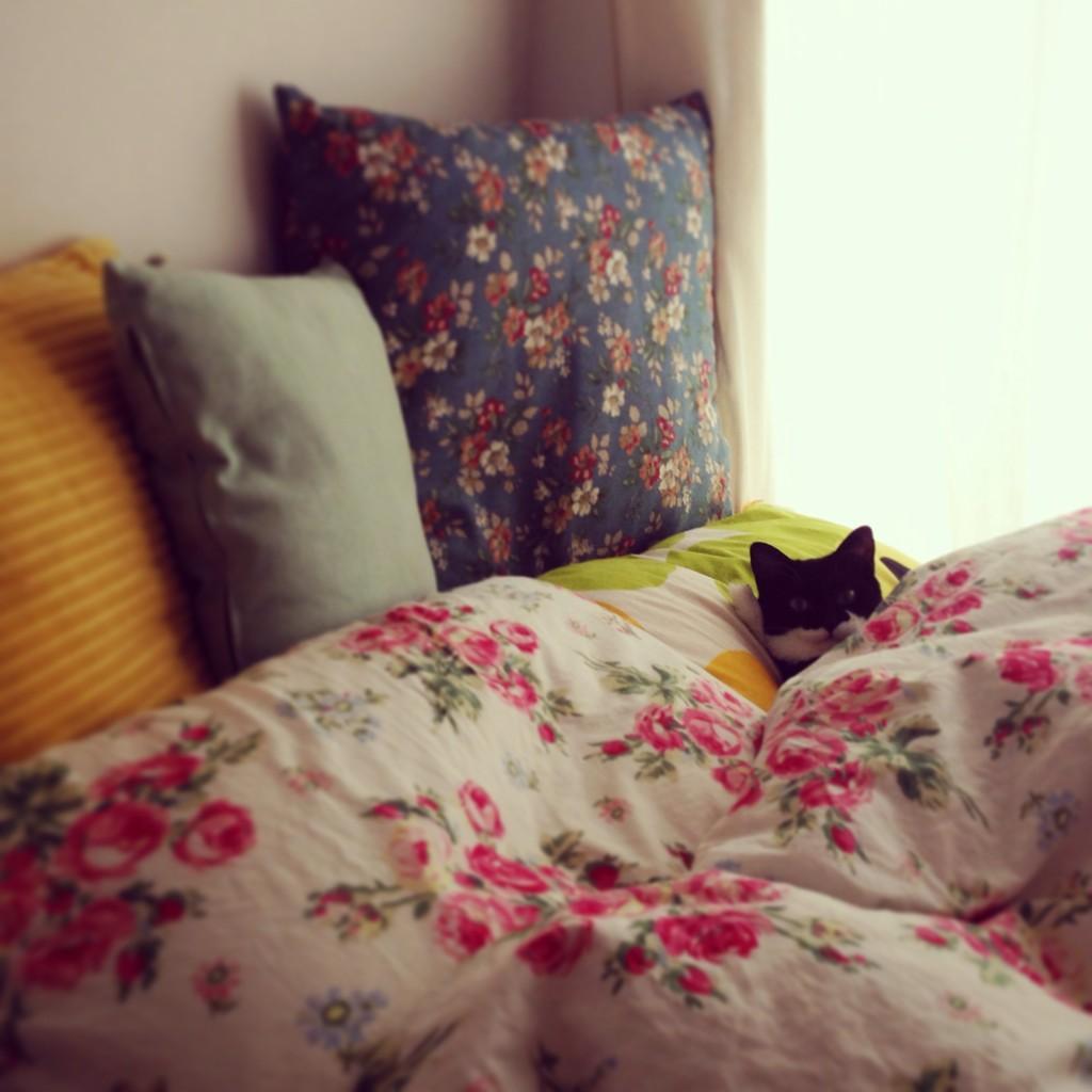 なんか視線を感じると思ったら猫が添い寝待ちしてた。 pic.twitter.com/BjW9AM4GcX