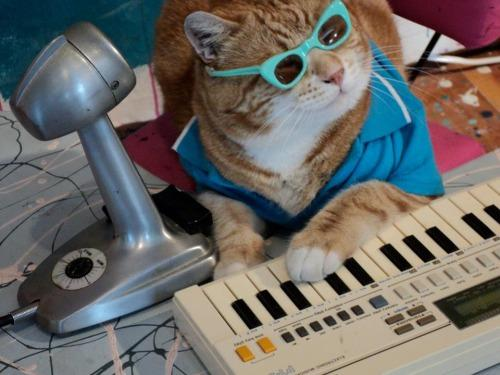 """""""alright you night owls out there this one goes out to you, the midnight meow mix"""" http://t.co/miKg8jnWX5"""