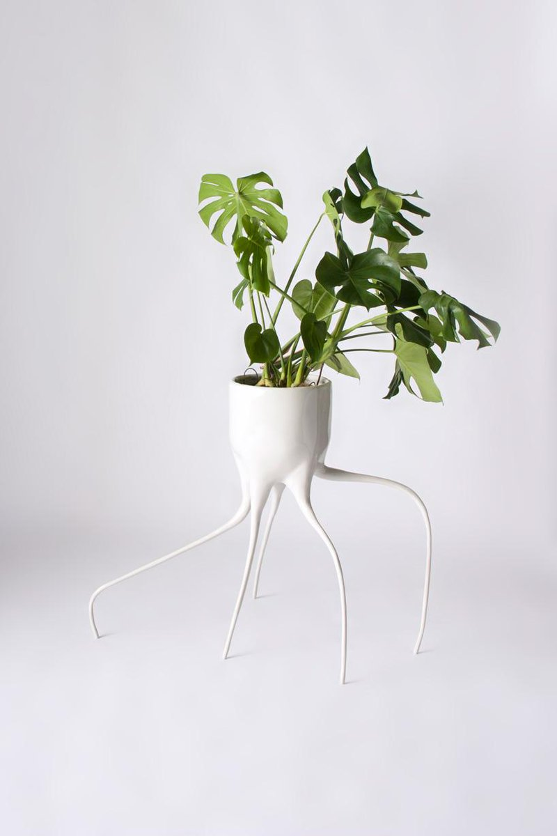 "Monstera Pots by Tim de Weerd, a new ""species"" of plant pot http://t.co/nWfDg0iwa3 http://t.co/NyLgHoGaVd"
