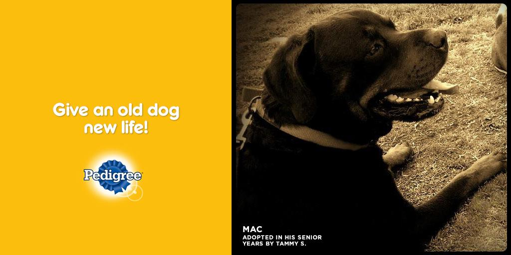 Pedigree on Twitter:
