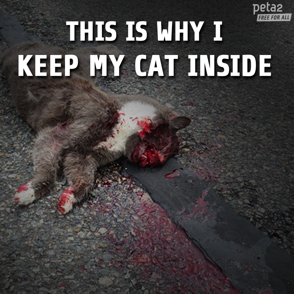 hit animals cats cars inside tortured humans attacked often rt kitty lives even if