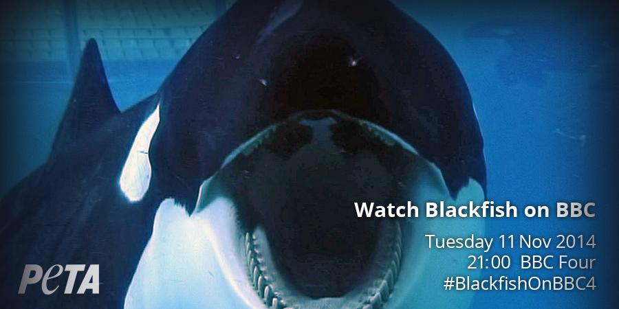 I am predicting (and hoping) that #Blackfish will start trending in the UK in about 20 minutes time. #BlackfishOnBBC4 http://t.co/FJZGWSysyg
