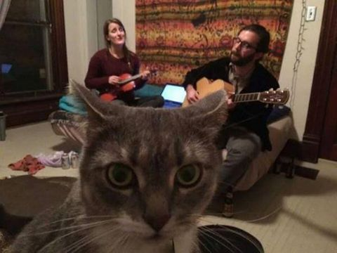 Please share this picture to raise awareness of the plight of cats trapped in a folk music environment via @samlevin http://t.co/wzrGnKUqkx