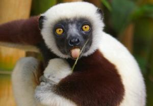 Goodbye sweet prince. I hope there's an endless snack machine in heaven for you 😭💔💔 #Zooboomafoo http://t.co/5w9NTlNLcj