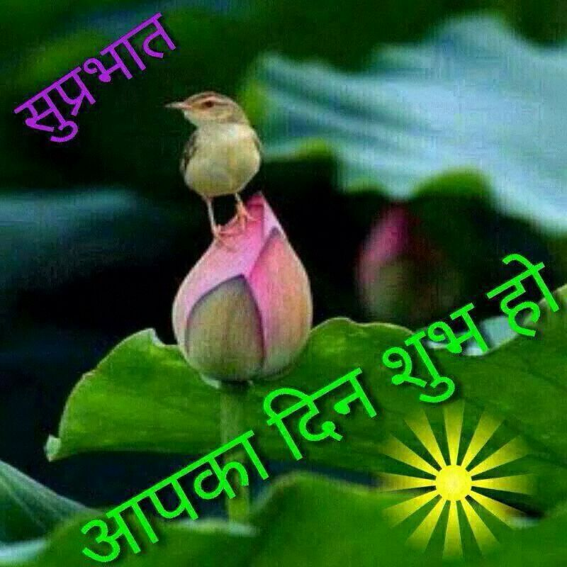 Vikramsinh Chauhan On Twitter Good Morning My All Friends Have
