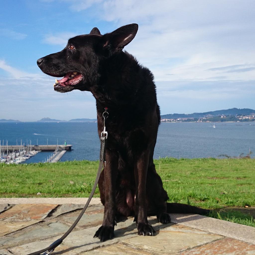 Un celtista ha perdido a su perra Hera por la zona de Teis/Chapela/Redondela https://t.co/AdBwshbt1j RT (contactad con @monterredondus)